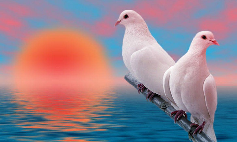 چهل و دو کبوتر سرخ